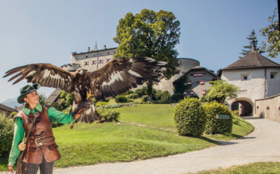 falconry at Werfen