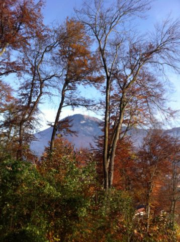 autumn view of the Moenchsberg mountain